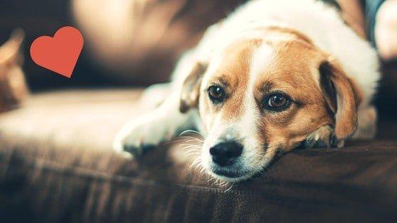 Benessere del Cane – Guida Utile ?