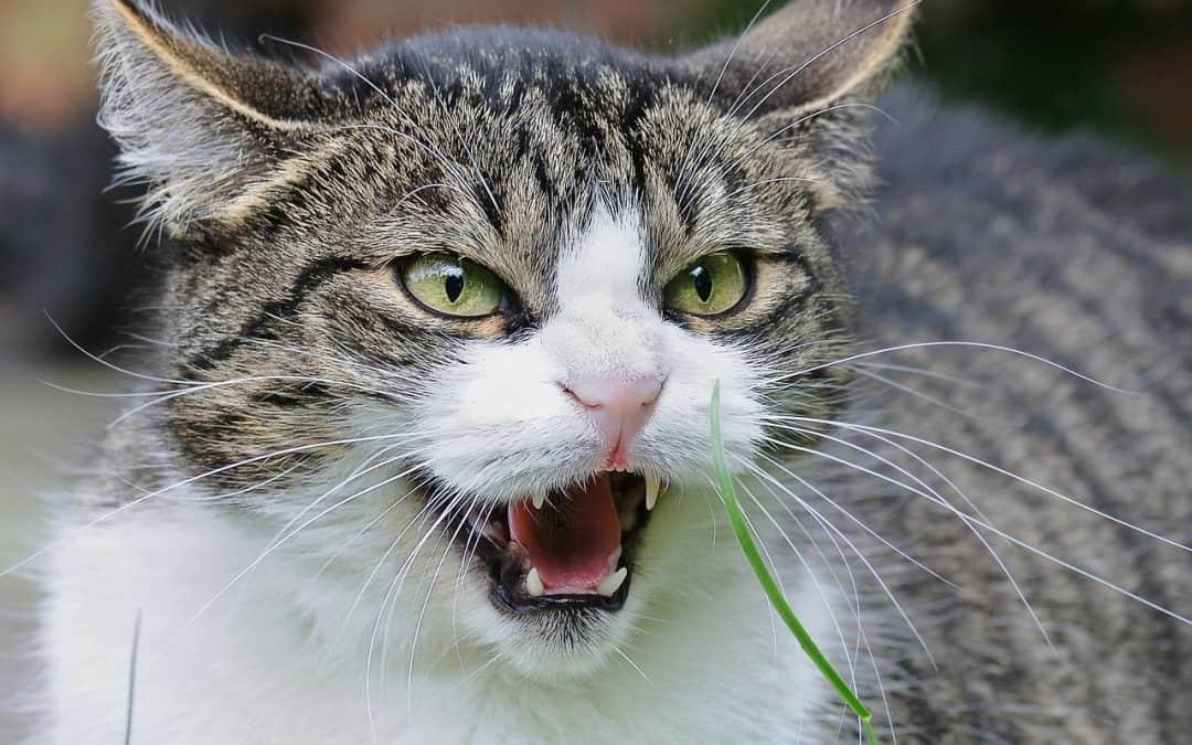 Gatto comportamento: i segnali per comprendere il suo umore