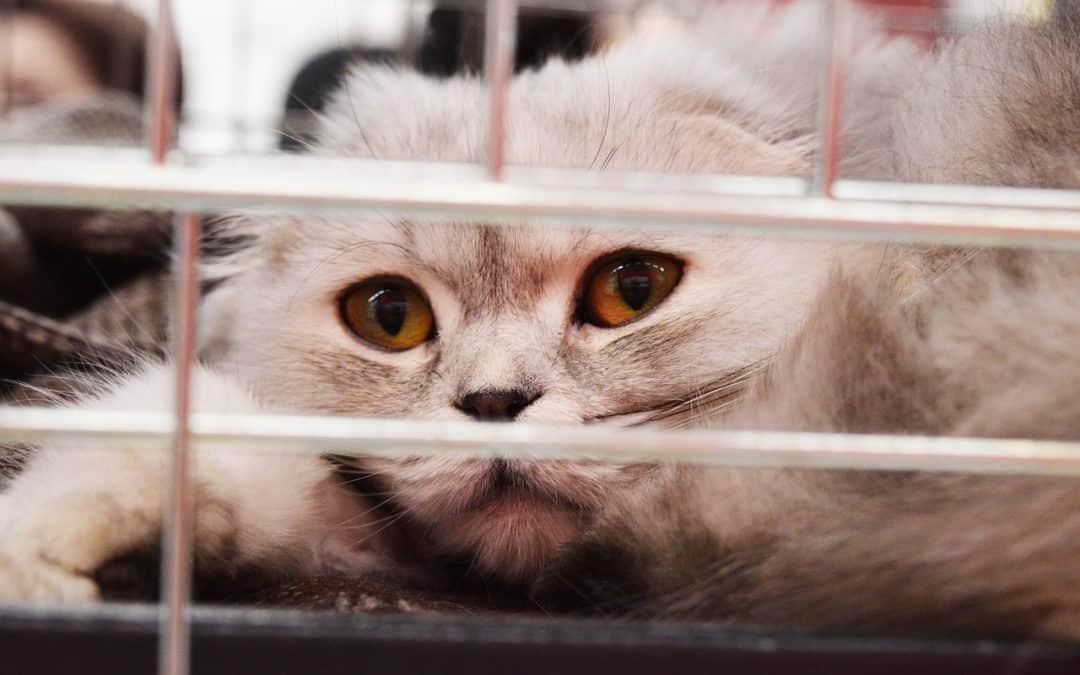 Trasportino per gatti: scegli il modello giusto